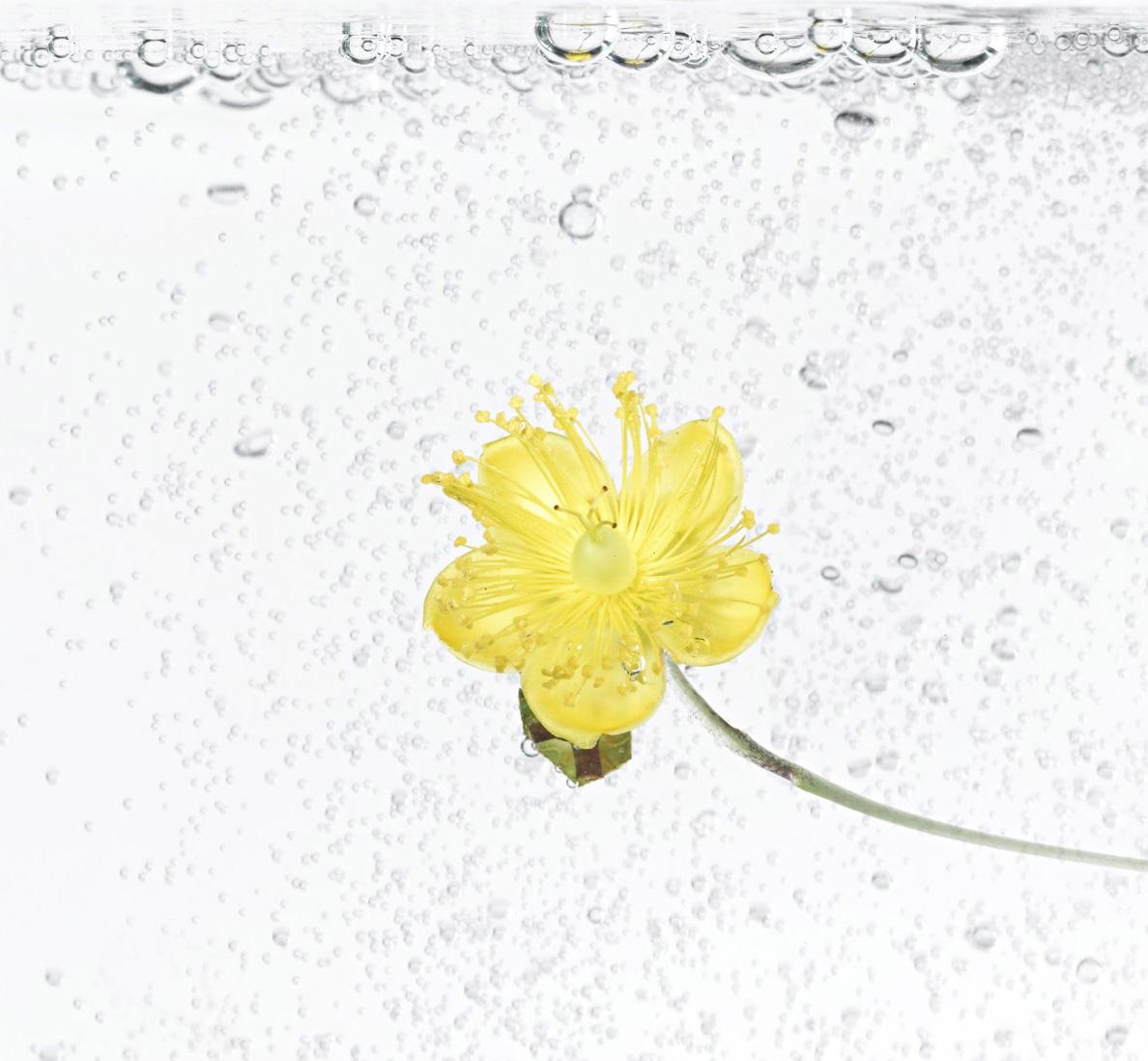 Aqua gelb 2