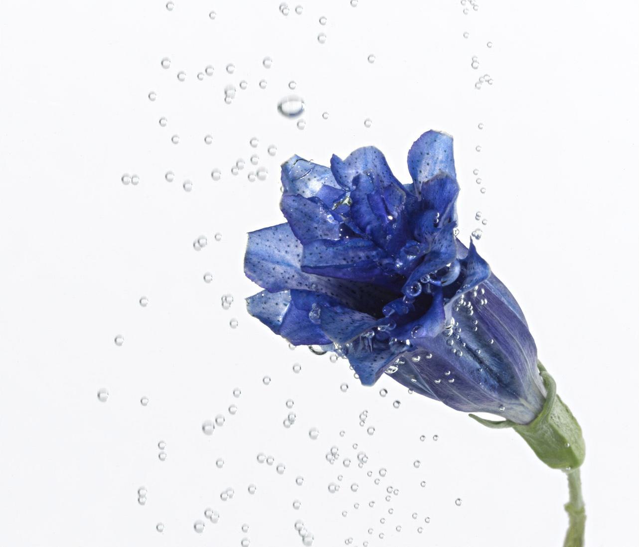Aqua blau 1