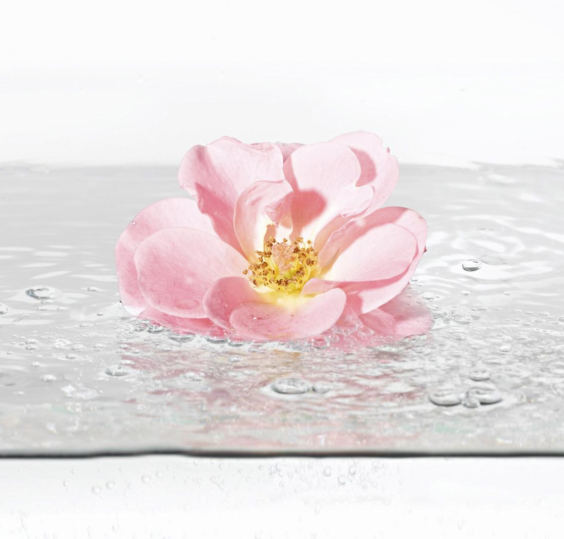 Aqua Rose 1