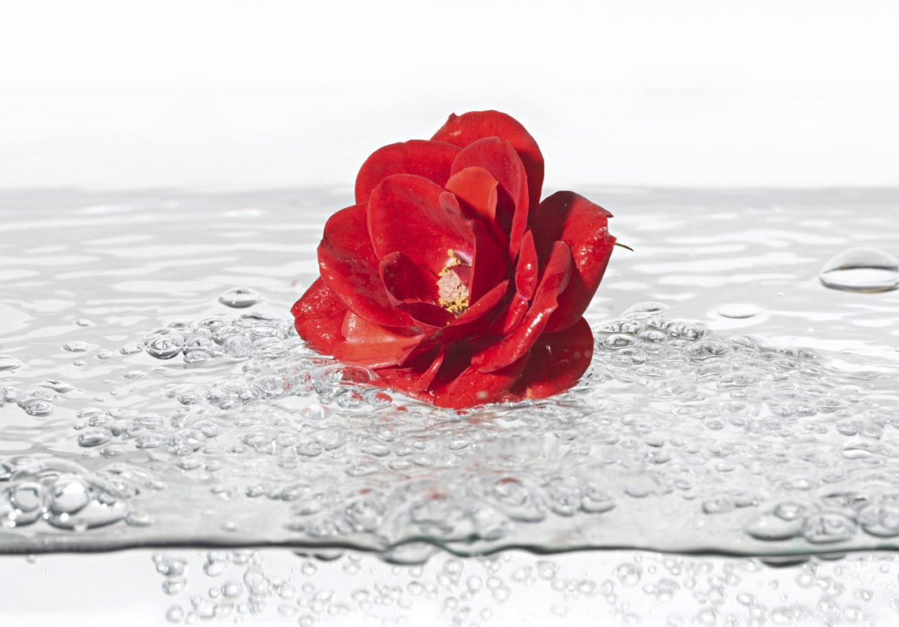 Aqua Rose 2