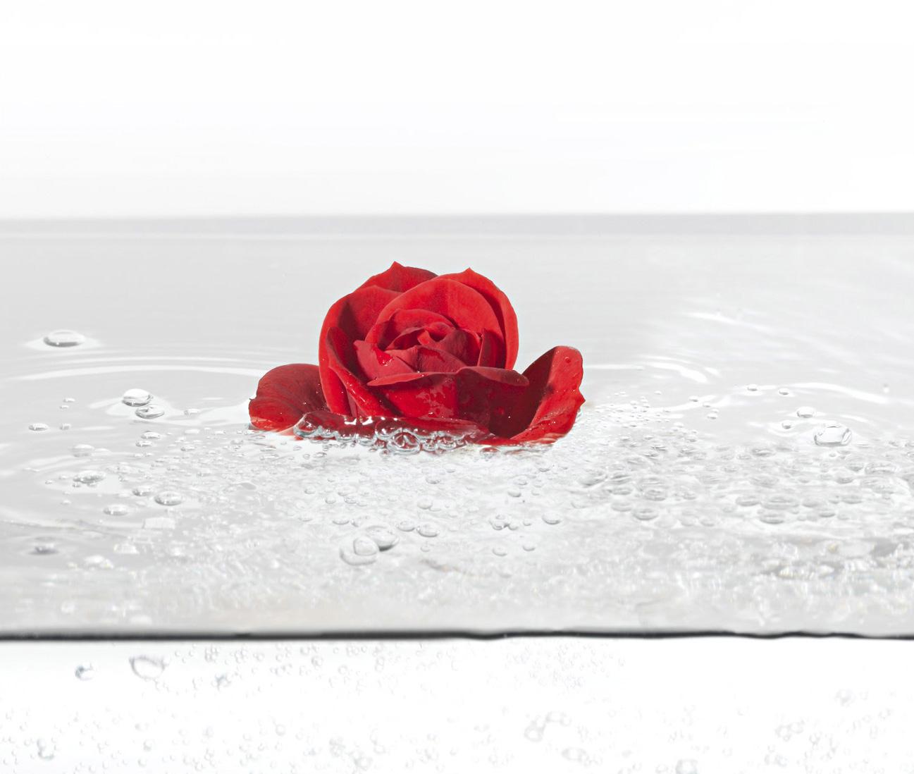 Aqua Rose 3